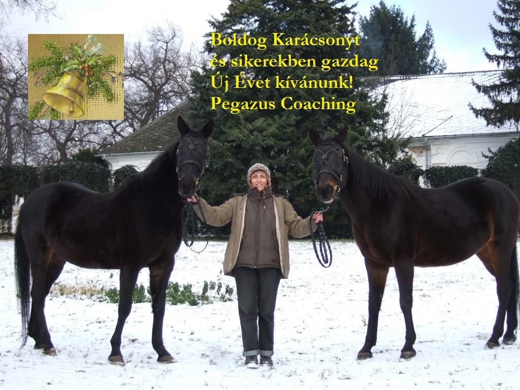 BUÉK_PegazusCoaching